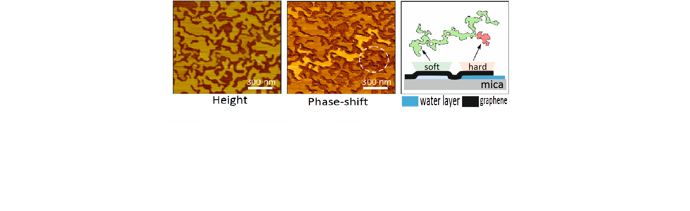 Non-monotonous_wetting_of_graphene-mica_and_MoS2-mica_interfaces_with_a_molecular_water_layer_unterschrift_bearbeitet_5.png
